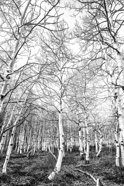 Stark Forest